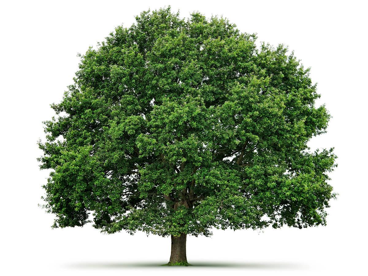 Baum Malergeschäft Dietlikon